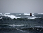 Gypsy kite in wild sea